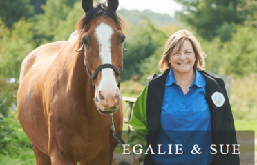 Partnering Horses with Humans